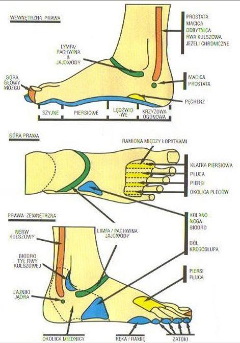 Refleksoterapia - stopy